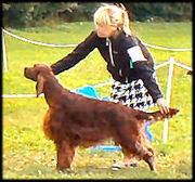 Coppers Art of Bubbles winning the CC/Premium both days ISF dog show 27-28 th of August 2011