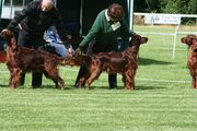 9th &10th June Belfast and District Irish Setter Breed Club Championship and Open Shows