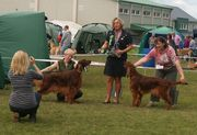 Killarney All Breed Ch Show