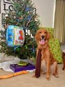 Doug turned 1 on December 6th