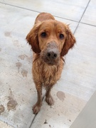 Uh oh!! Someone decided to dig in the mud after a big rainstorm!!