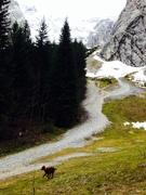 Downhill setter ;-)