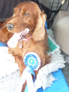 Willow 2nd Oakamoor 20th july 2014 Waggliest tail.