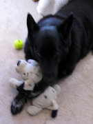 Bear with his puppy and his ball!