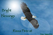 bald-eagle-flying_4091