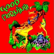 morning-frogs