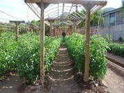 Sustainable gardening pictures