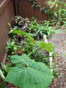 fenced garden spot