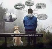 El perro no piensa tanto.