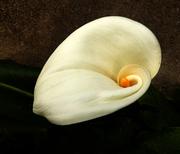 """""""fiore-armonioso"""""""