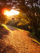 California Trail in Fall