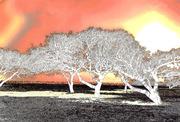 Arboretus Continuum