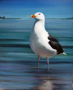 Stage Harbor Gull