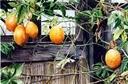 Fruits of Autumn - MHughes