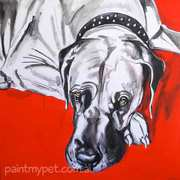 Arthur - Fawn Great Dane