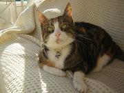 My cat Jennifer Lopez (1)