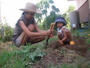 Planting vegetable 2