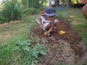 Planting vegetable 3