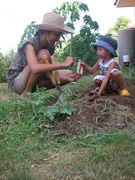 Planting vegetable 1