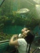 ดูปลาในอุโมงค์