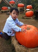 Season in Chiangmai