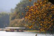 茅家埠的秋色-1