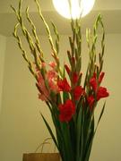 Flowers for U Kisses!