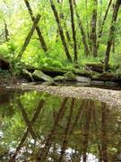 Health Salmon Habitat