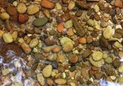 Sweet Creek Pebbles thumbnail
