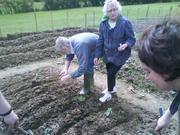 The gang from the Becon centre sowing away at brocolli at their allotment