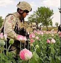 soldier cia poppy fields opium