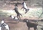 Dogs chasing waterhose