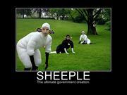 sheeple-1b