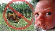 no-gmo-baby-with-cows