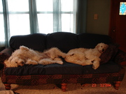 Sadie and Molly .. a bit tired