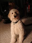 Molly Feb 2010