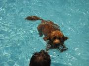 I am swimming!!!