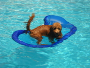 Safe Raft