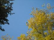 Árvore e ceu