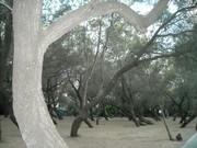 Bosque em Tel Aviv - junho de 2010