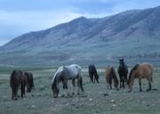 2013 Vee Bar Literature & Landscape of the Horse Carol