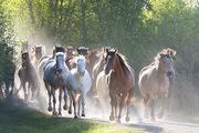 2015 Vee Bar Literature & Landscape of the Horse Retreat - Photos by Joel Higgs