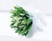 Amazing-Image-of-Nature-Landscape-Purity-Perfume-a-Bouquet-of-White-Flowers