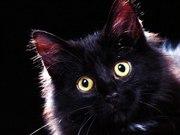 котик милые глазки
