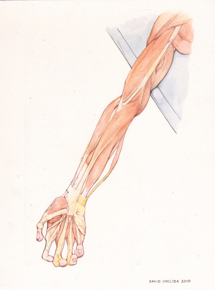Cadaver Arm Color