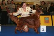 World Dog Show 2009
