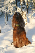 Melvin playn in the Snow in Sweden