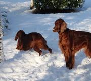 Snowy in Suffolk