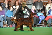 crufts 2010, dogring
