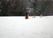 A Possible Photo Of Bigfoot